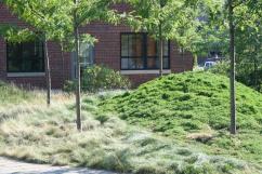 Sustainable Plantings: Cambridge, Massachusetts, Blackstone Power Plant