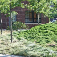 Sustainable Plantings: Cambridge, Massachusetts, Blackstone Power Plant